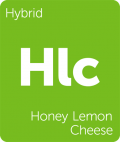 Honey Lemon Cheese marijuana strain tile