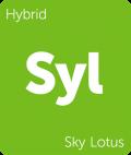 Sky Lotus marijuana strain tile