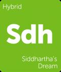 Siddhartha's Dream weed strain