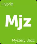 Mystery Jazz weed strain