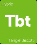 Tangie Biscotti weed strain