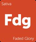 Faded Glory weed strain