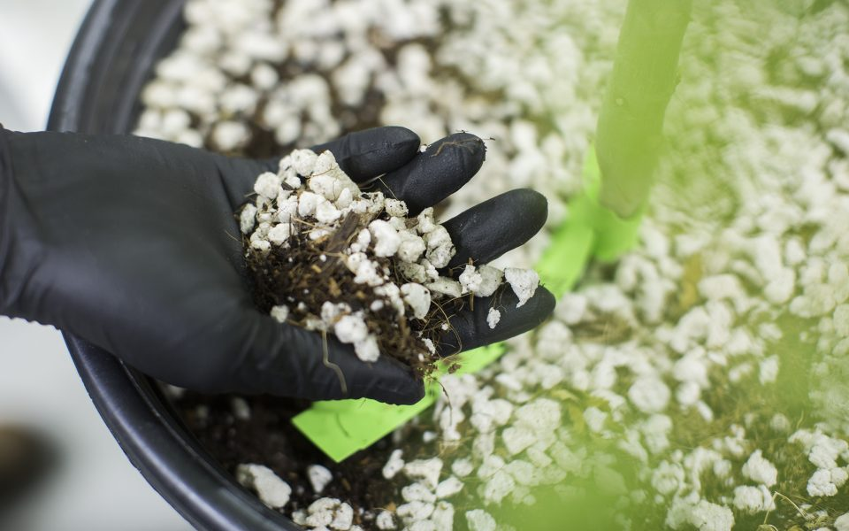 Tips for Improving Your Cannabis Soil on a Budget