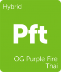 OG Purple Fire Thai weed strain tile