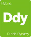 Dutch Dynasty weed strain tile