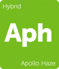 Apollo Haze weed strain tile