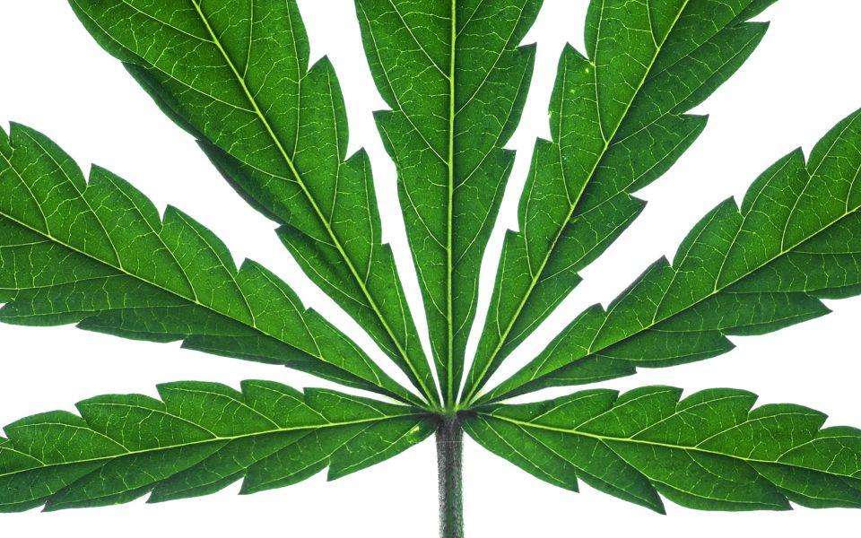 Estonian Town's New Logo? A Cannabis Leaf
