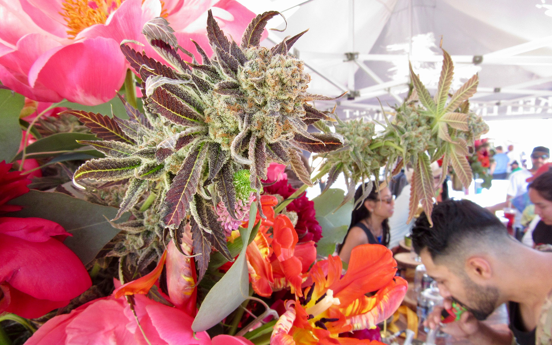 NorCal Cannabis Cup 2018 CRAFT booth. | Photo by David Downs