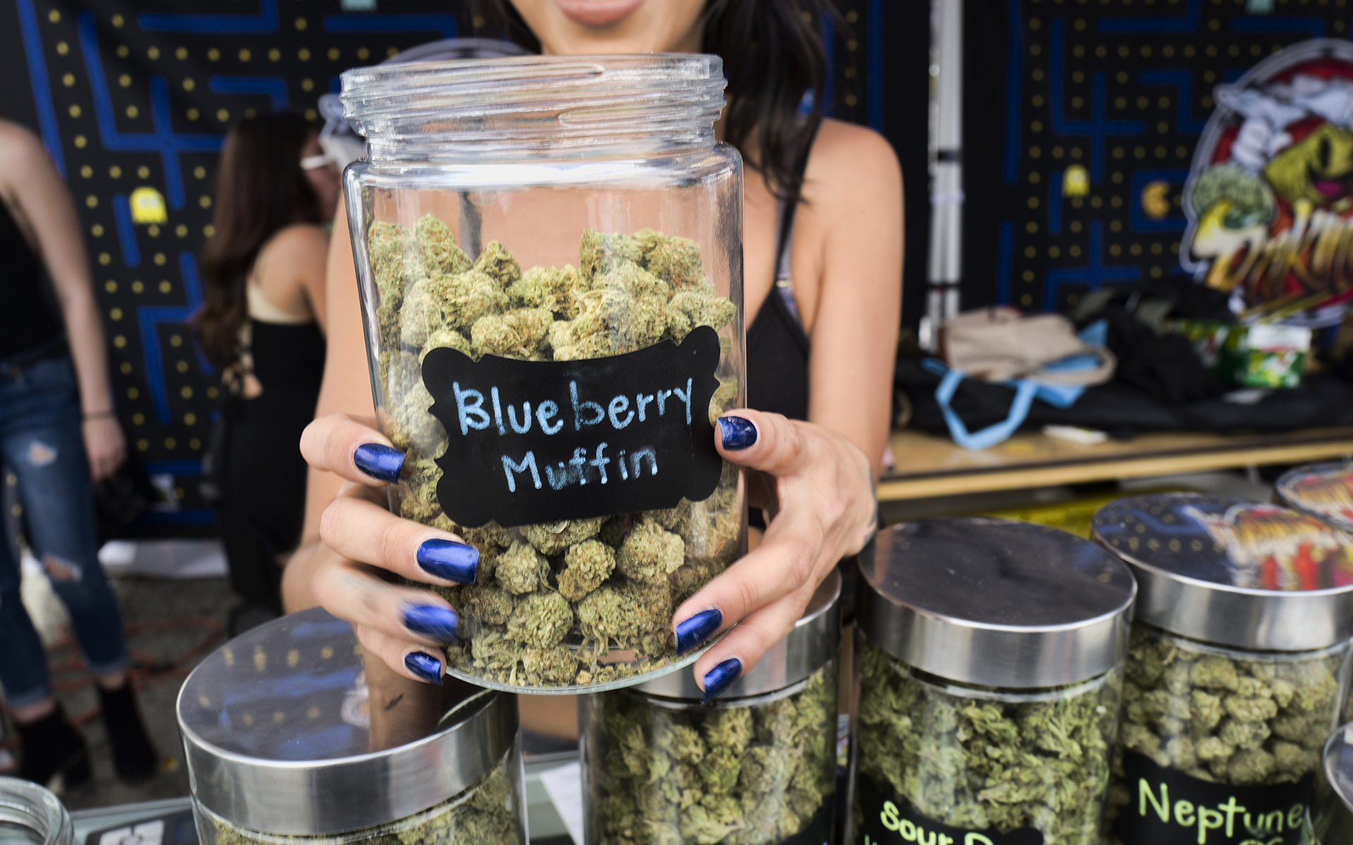 In this Saturday, April 21, 2018 photo a bud tender displays their Blueberry Muffin strain of cannabis at the High Times 420 SoCal Cannabis Cup in San Bernardino, Calif. (AP Photo/Richard Vogel)