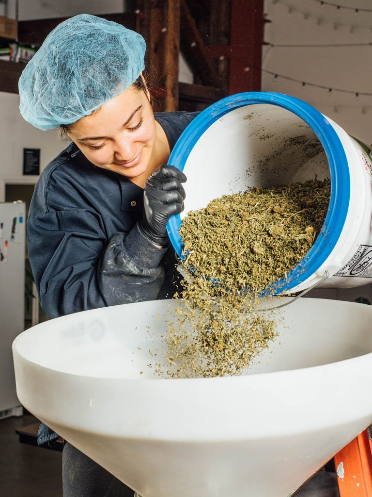 Heylo's cannabis extraction process part 1: loading the weed