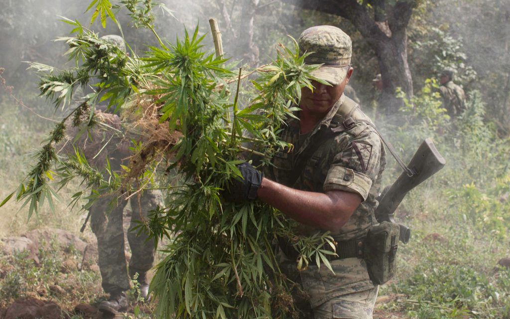 Legalization vs Mexico's Powerful Cartels: Who'd Win? | Leafly