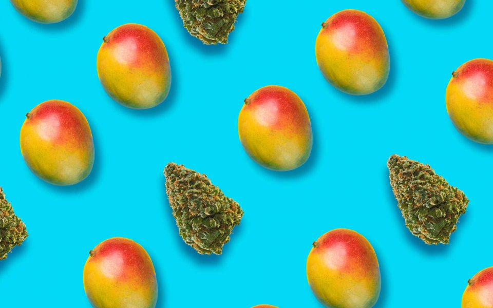 Craving the Tropics? Try a Mango-Flavored Cannabis Strain