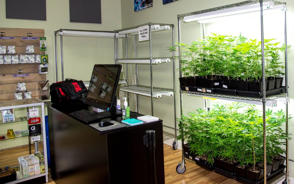 Marijuana clones for sale in Oregon: Kind Heart Collective Portland