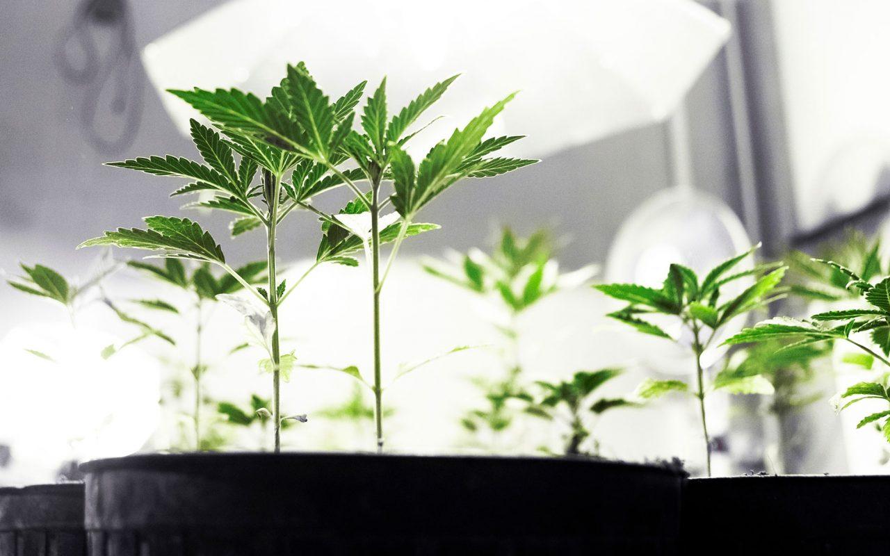 detroit-raid-medical-marijuana-header