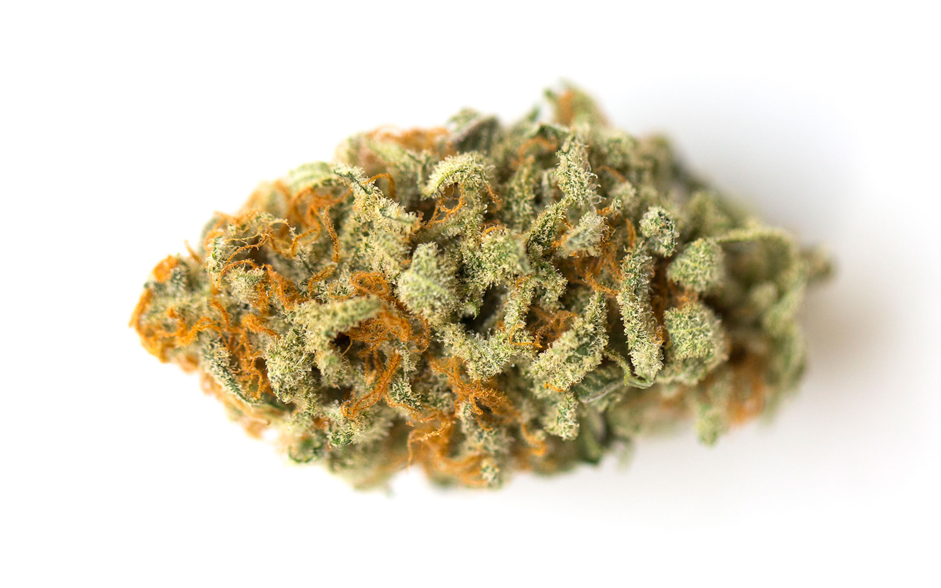 3 Aromatic Cannabis Strains to Chase Down in Oregon