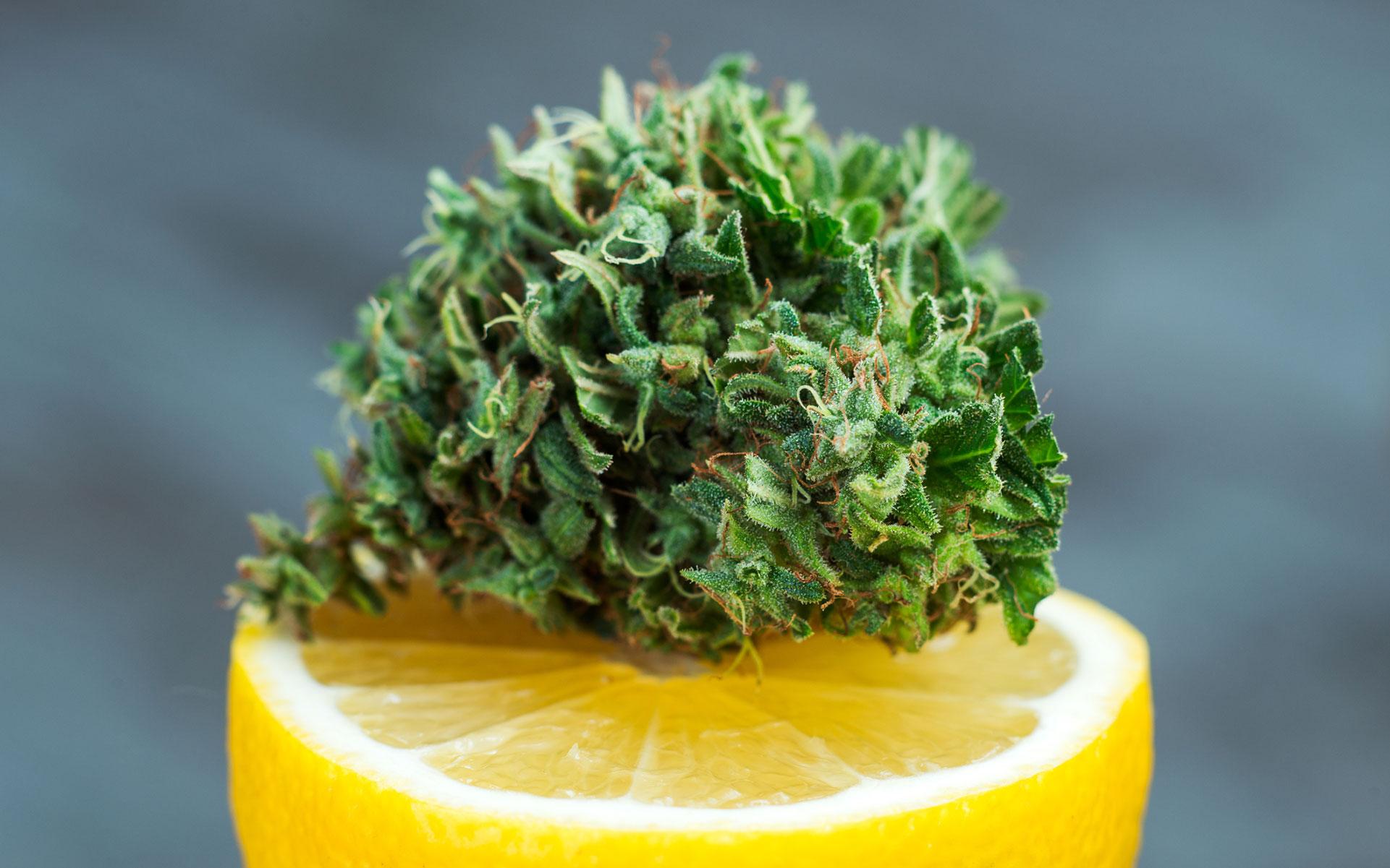Strains high in limonene