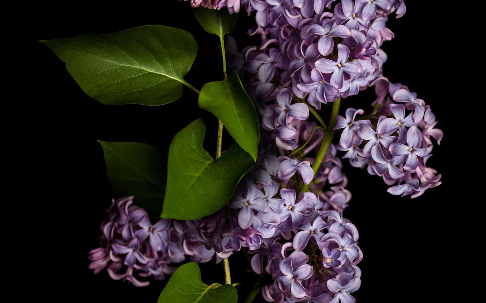 Terpinolene: The Least-Common Common Terpene