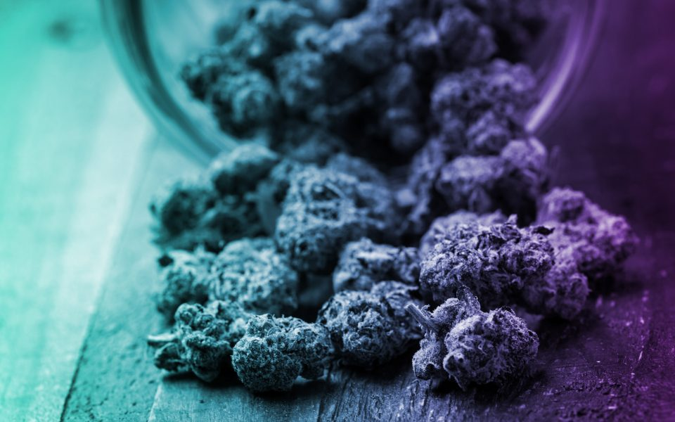 Oregon's Craft Cannabis Strains, by the Terpene
