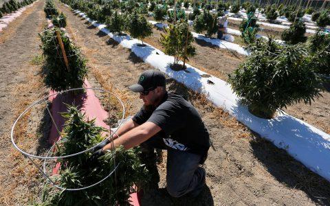 Cannabis Prices in California, Washington and Oregon — 2018