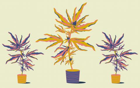 Growing Calendar for Outdoor Cannabis | Leafly