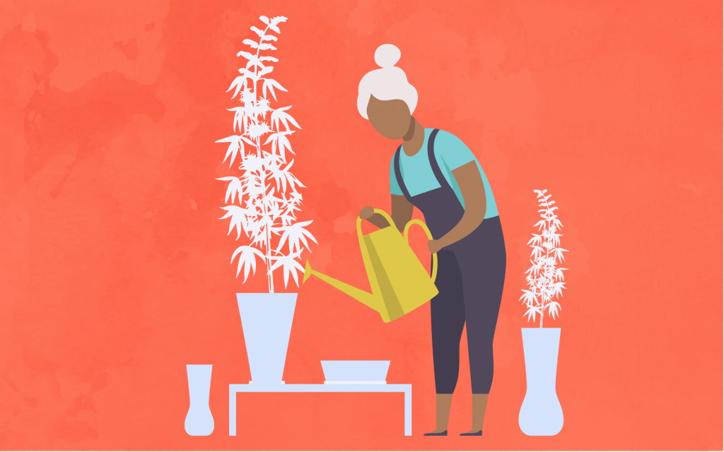 How to Build A Cannabis Garden for $100, $500, & $1000   Leafly
