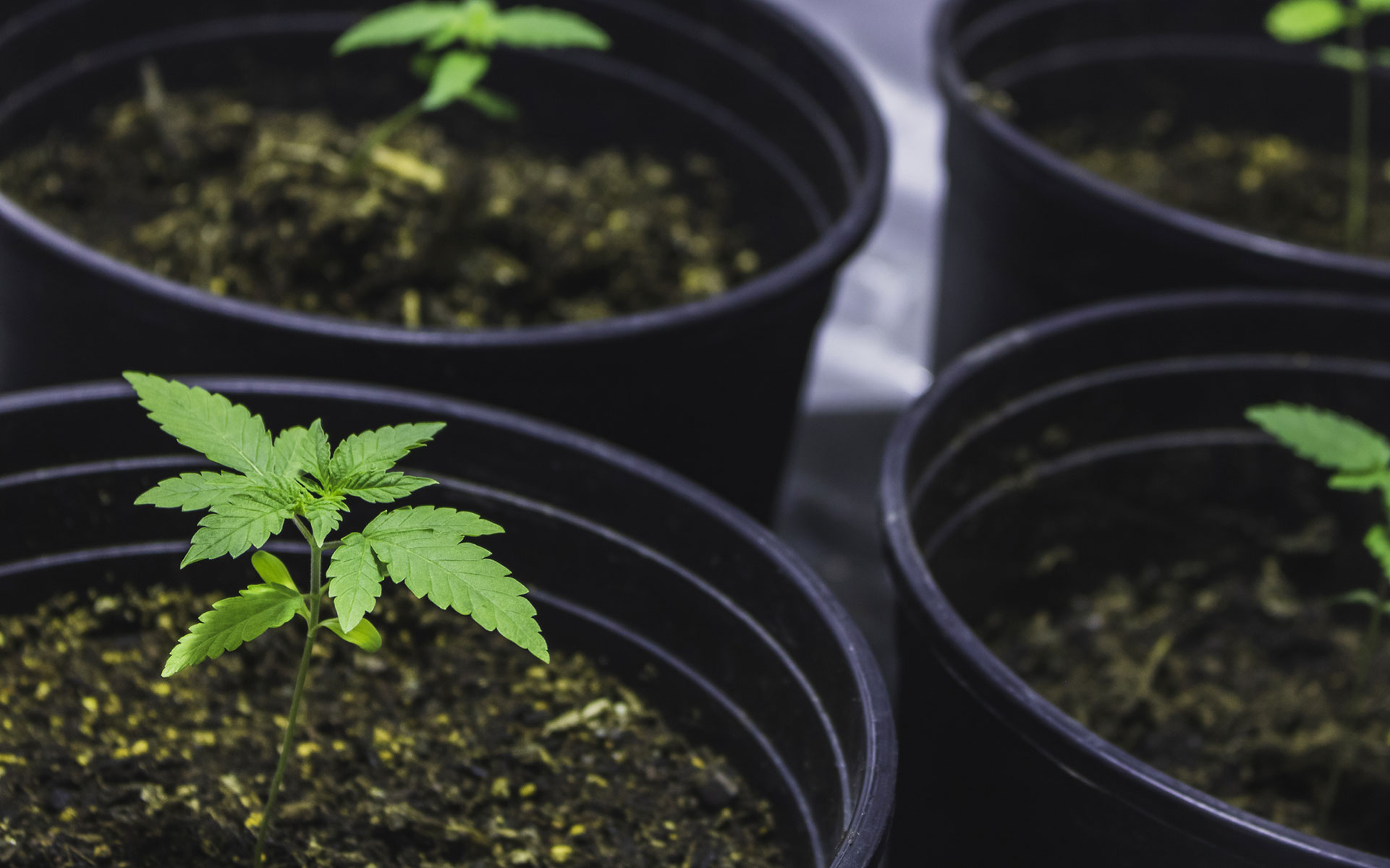 Plug & Play Grow Opps Make Cannabis Cultivation Easy for Canadians
