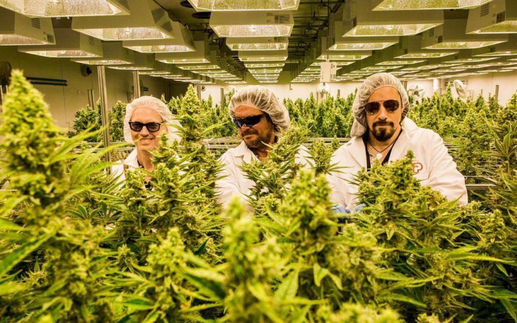 tragically hip celebrities cannabis