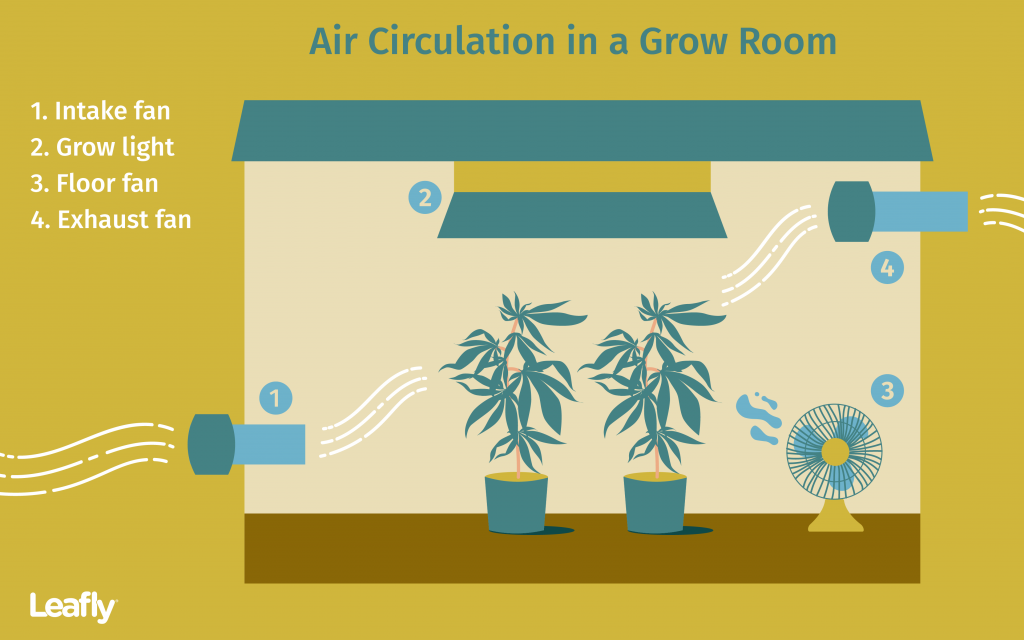 Improving Air Circulation in Your Cannabis Grow Room