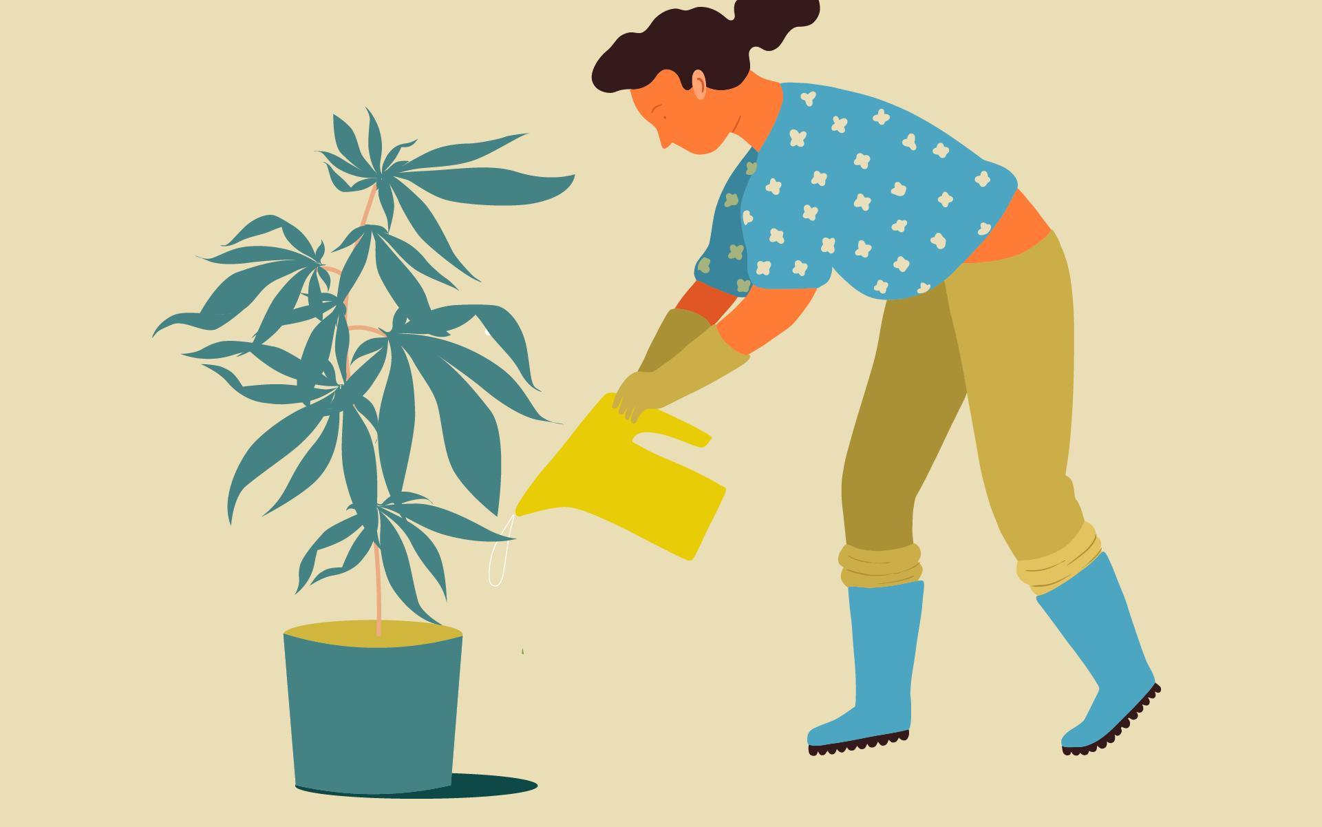 Leafly's Outdoor Cannabis Grower's Calendar thumbnail