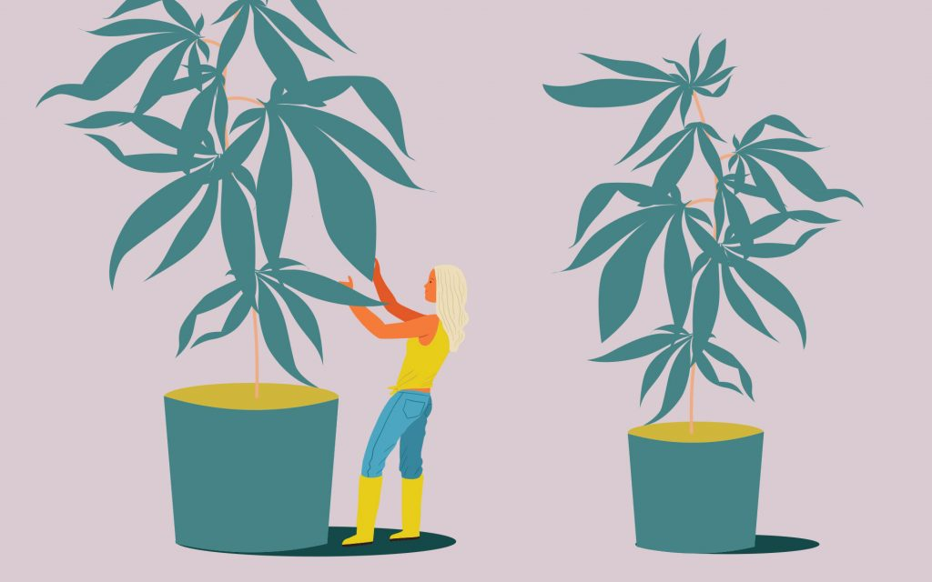 Tips for Growing Cannabis in a Tiny Space | Leafly