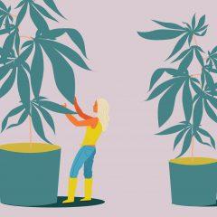 How to Grow Marijuana Indoors: For Beginners | Leafly