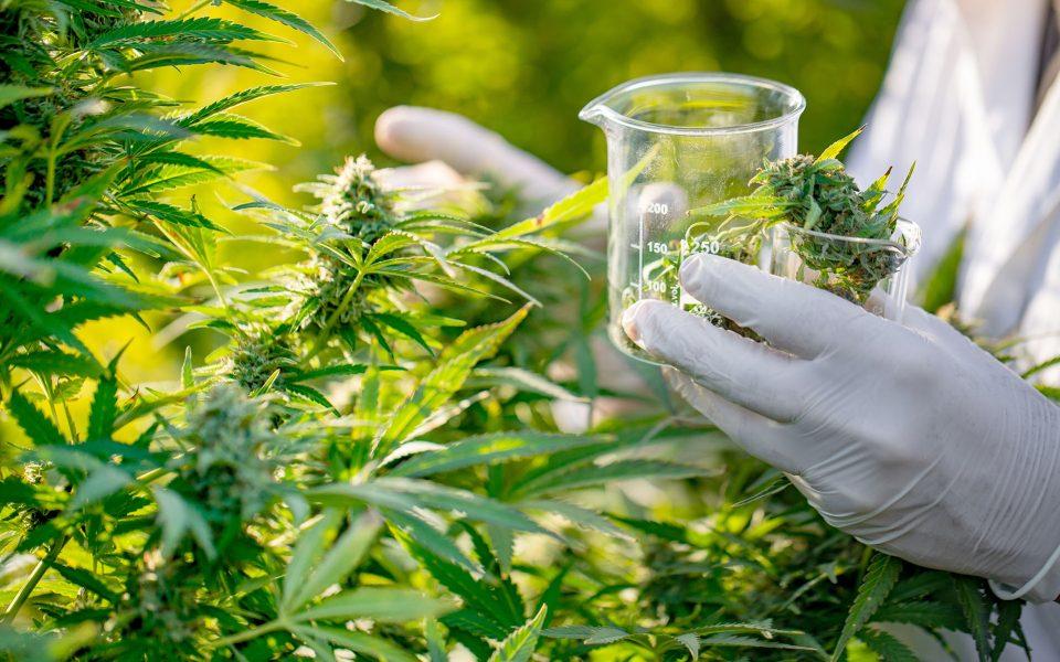 Louisiana Takes a Step Toward Finally Delivering Medical Marijuana