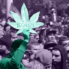 236f10e29d01 Cannabis CupHigh TimesMusic. Related Articles. Five Must-Hit Events at  Michigan's Hash Bash This Weekend