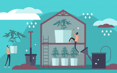 post-image-High-Tech Greenhouses: Grow Quality Marijuana More Efficiently