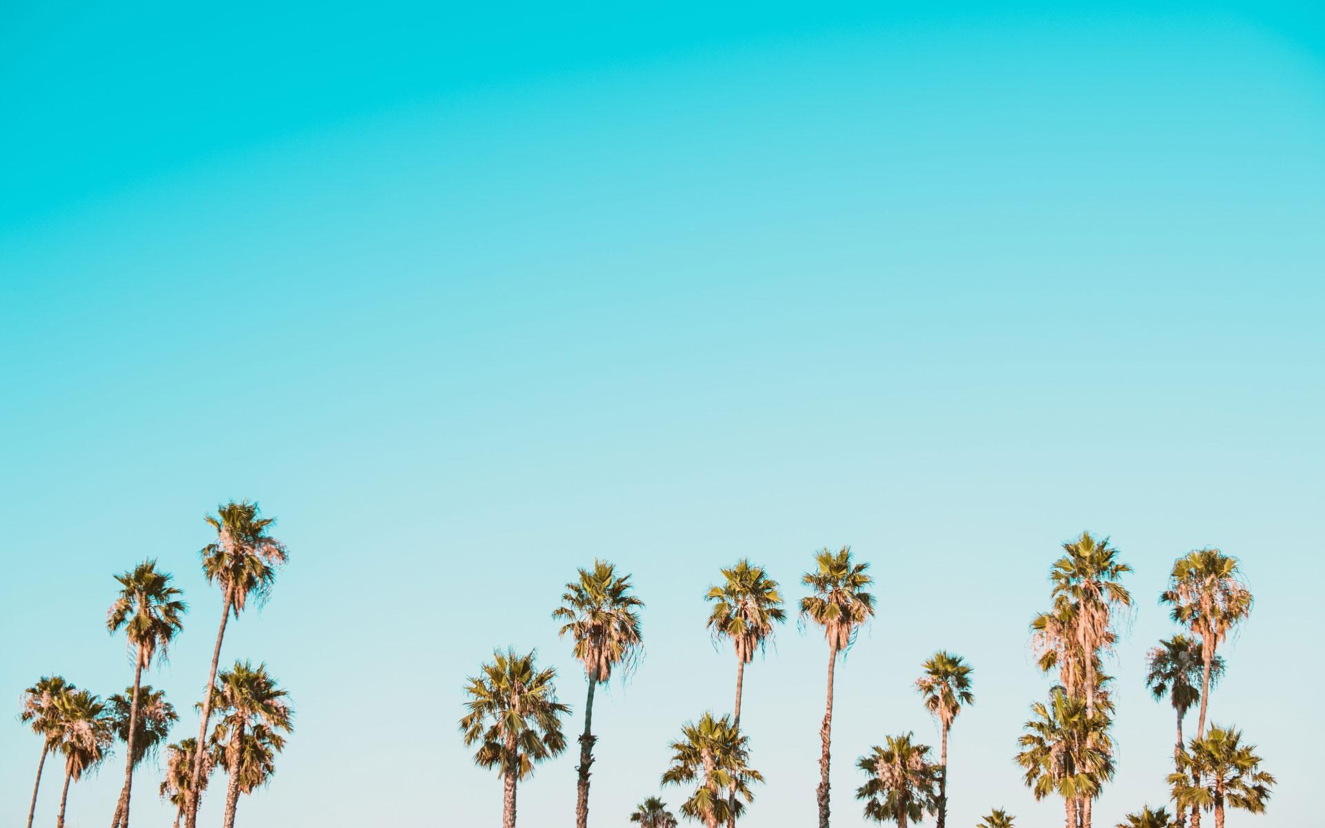 420 Calfornia