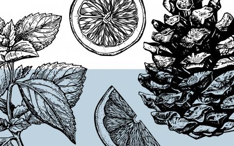 post-image-The Mysterious Cannabis Terpene Phellandrene