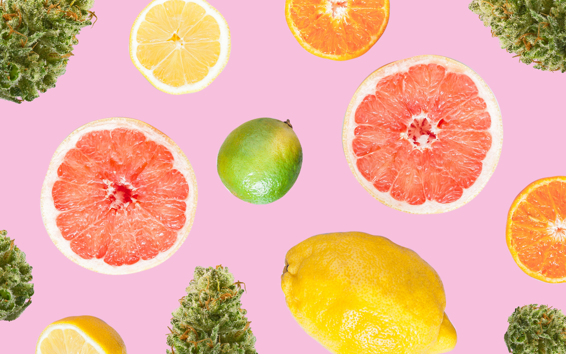 6 Cannabis Strains for People Who Love Citrus Terpenes