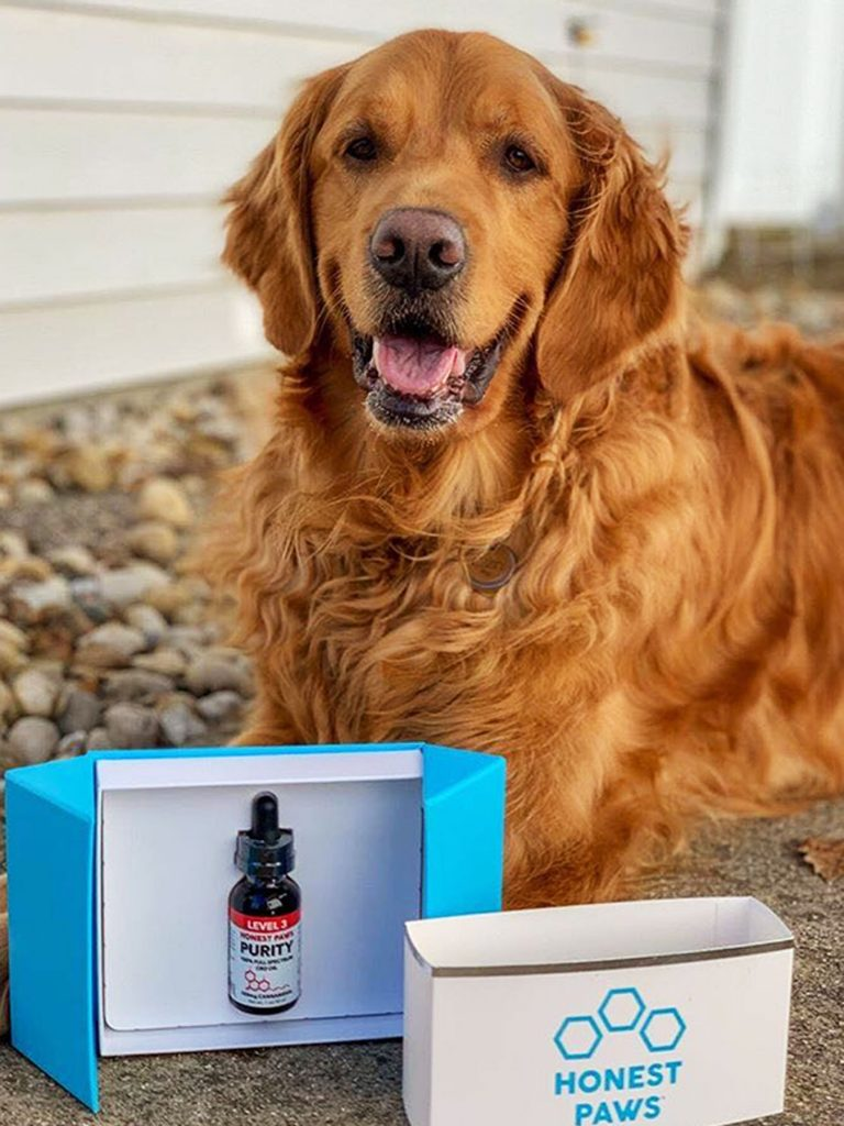 dog posed next to Honest Paws CBD oil