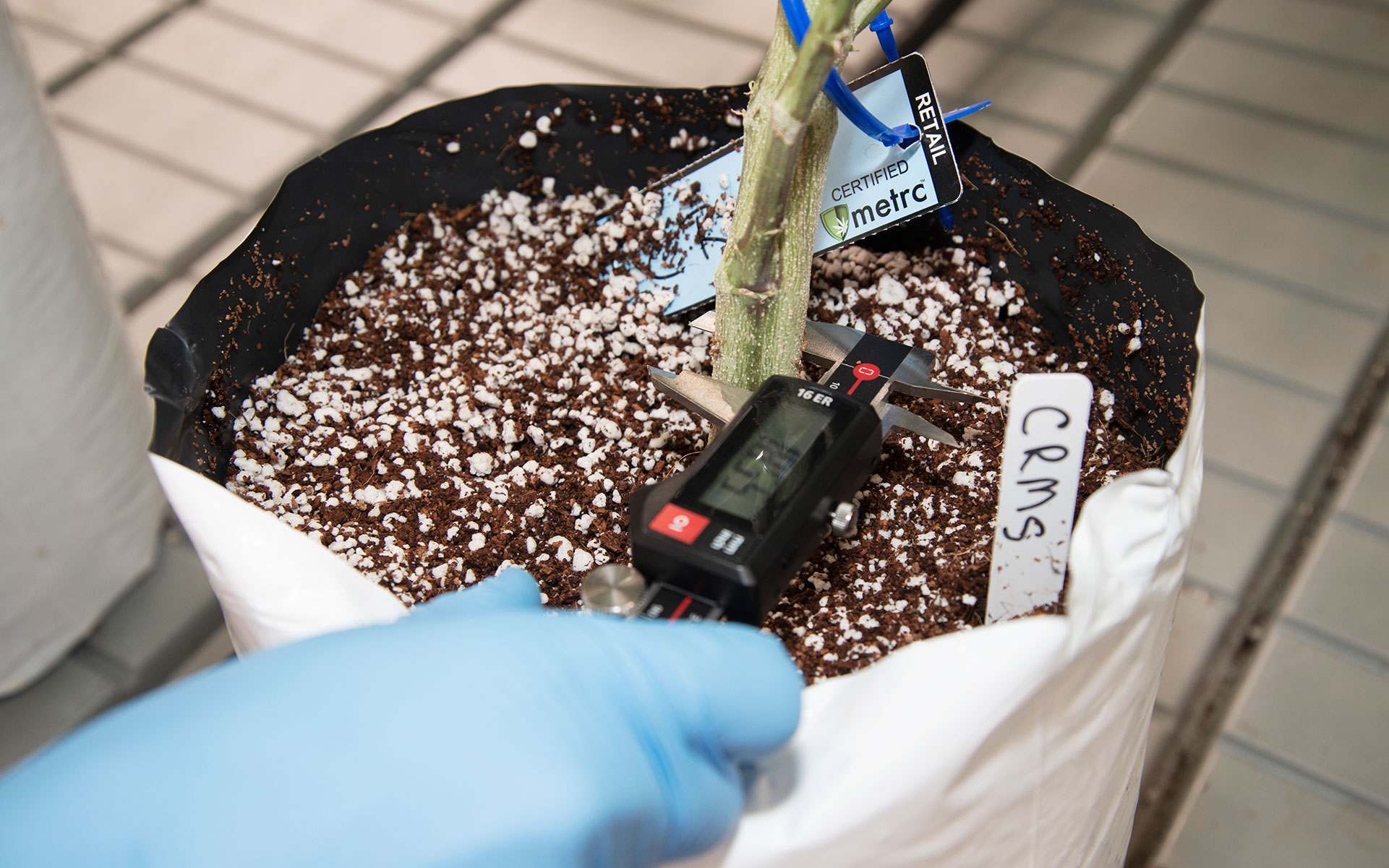 gathering cannabis soil data