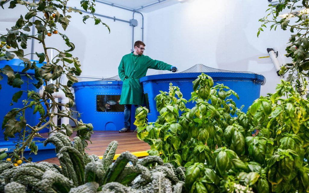 aquaponics grow indoors