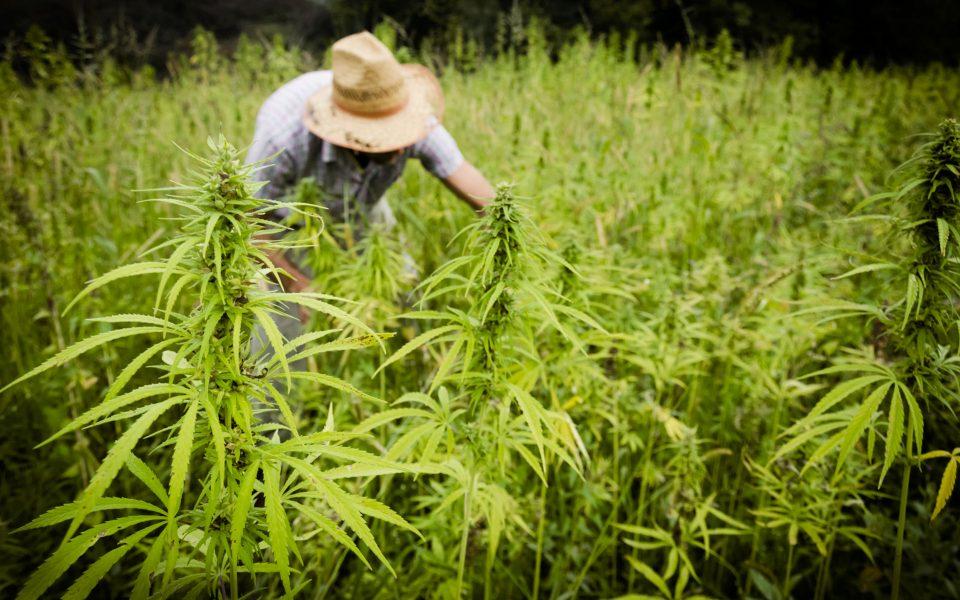 Secret Nature Brings Craft Cannabis Sensibility to CBD Flower