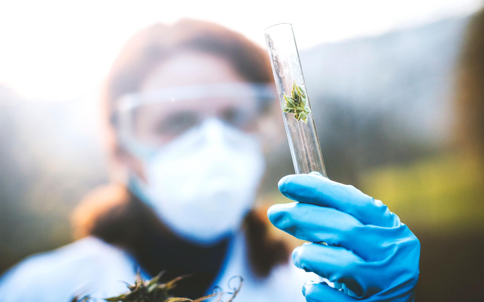 cannabis research