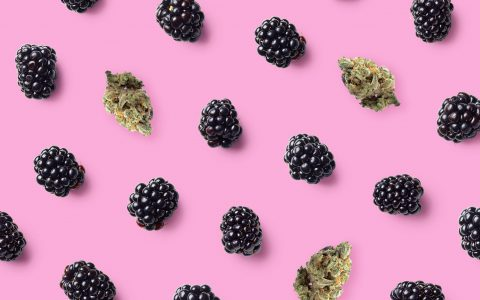 post-image-6 Cannabis Strains for People Who Love Berry Terpenes