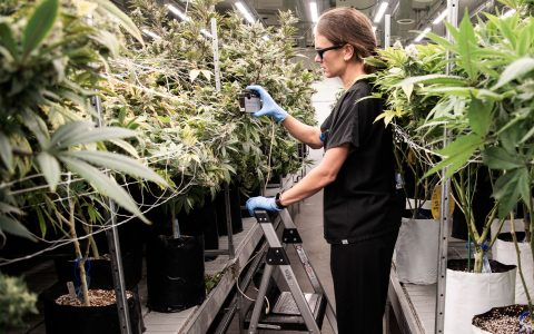 post-image-Inside the Research Grow Operation With Rx Green Technologies