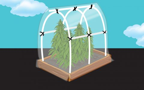 post-image-How to Build a Cannabis Greenhouse in Your Backyard