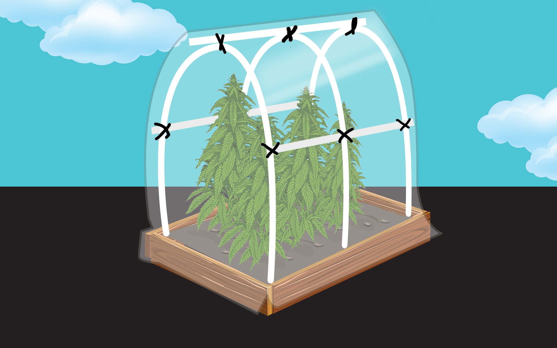 photo of How to Build a Cannabis Greenhouse in Your Backyard image