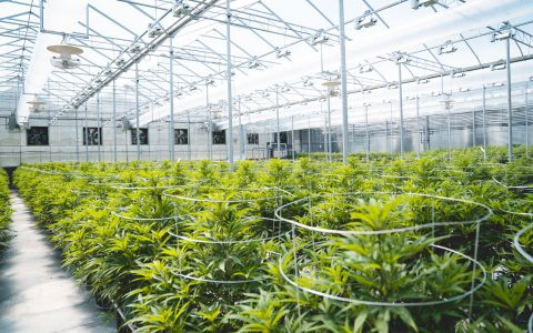 post-image-Natural Ingredients: How BC's Tantalus Labs Produces Premium Cannabis