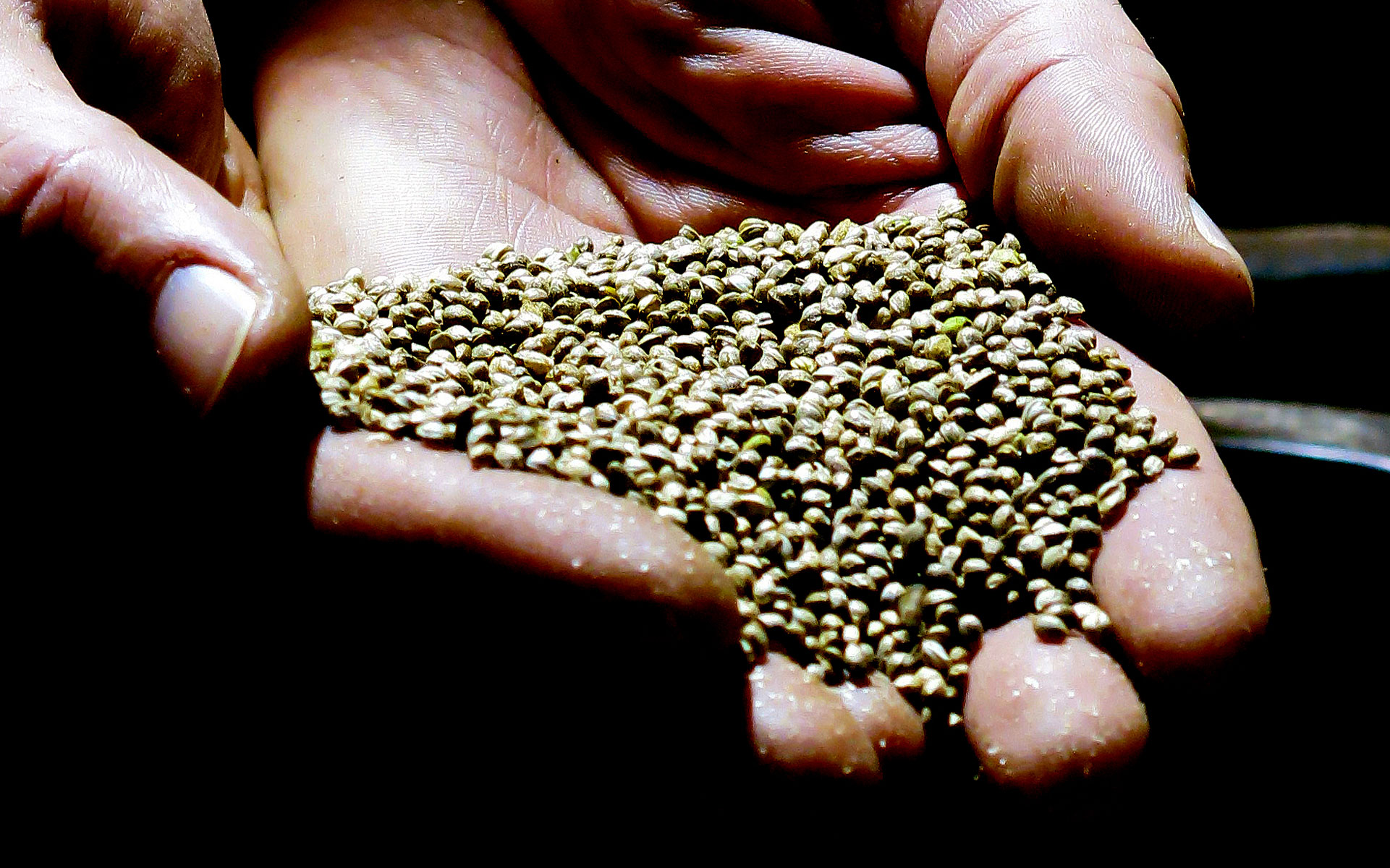 hemp seed certification header