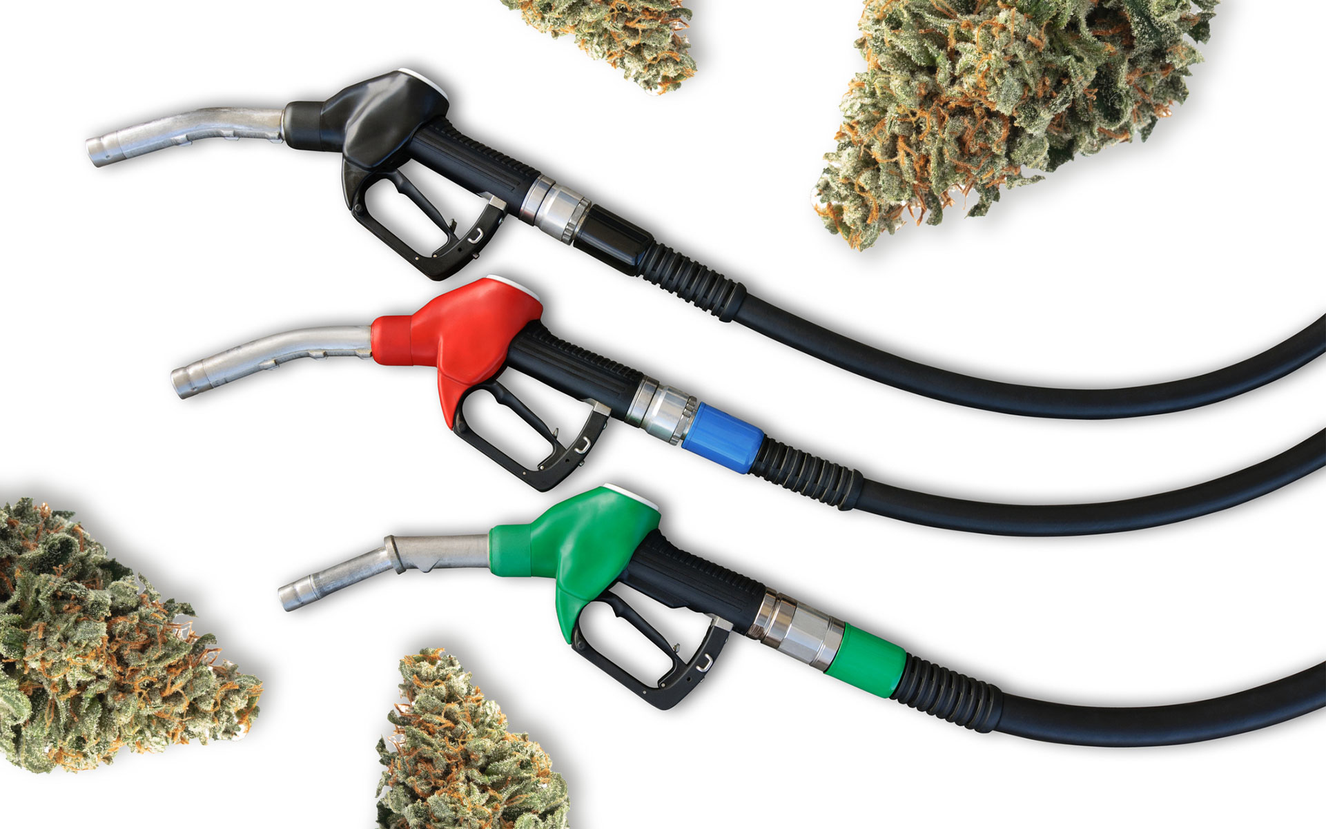 5 Cannabis Strains for People Who Love Diesel Terpenes