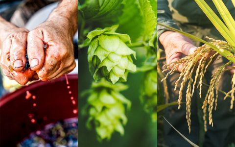 post-image-How to Grow Sustainable Cannabis? Look to Beer, Wine, and Rice Industries